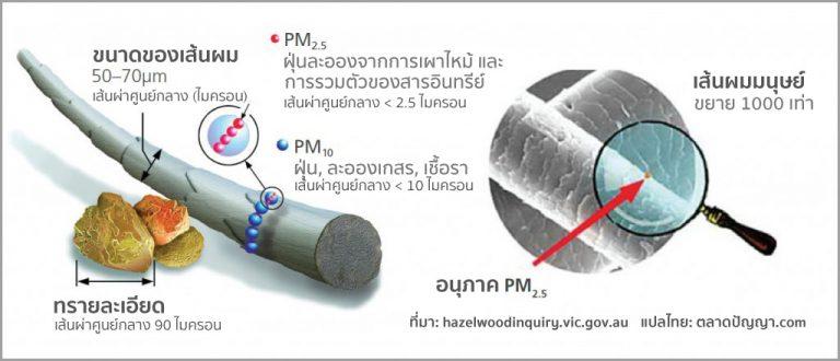 ขนาดของฝุ่น PM2.5 เทีบบกับเส้นผมมนุษย์